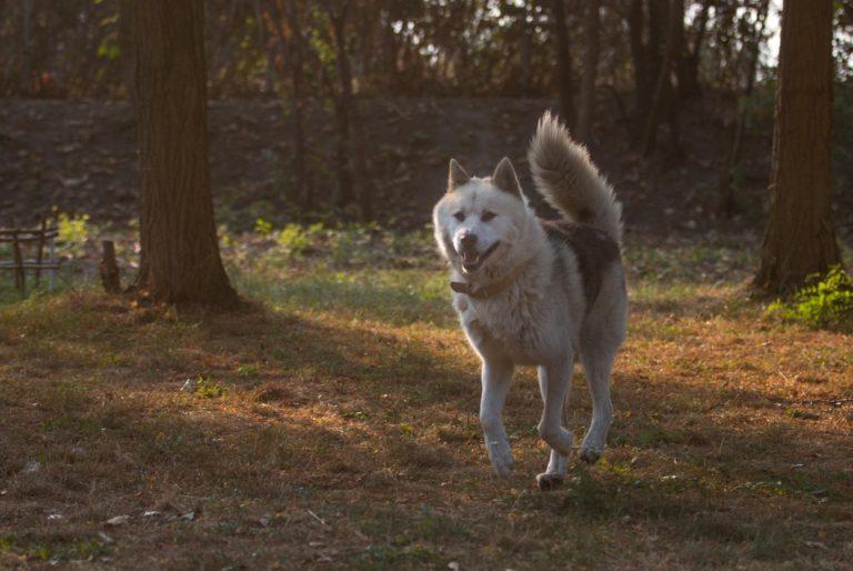 Hund Richard läuft über das herbstliche Grundstück