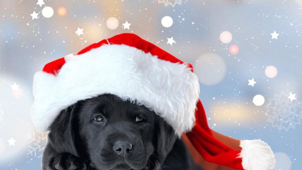 Hund mit Weihnachtsmannmütze