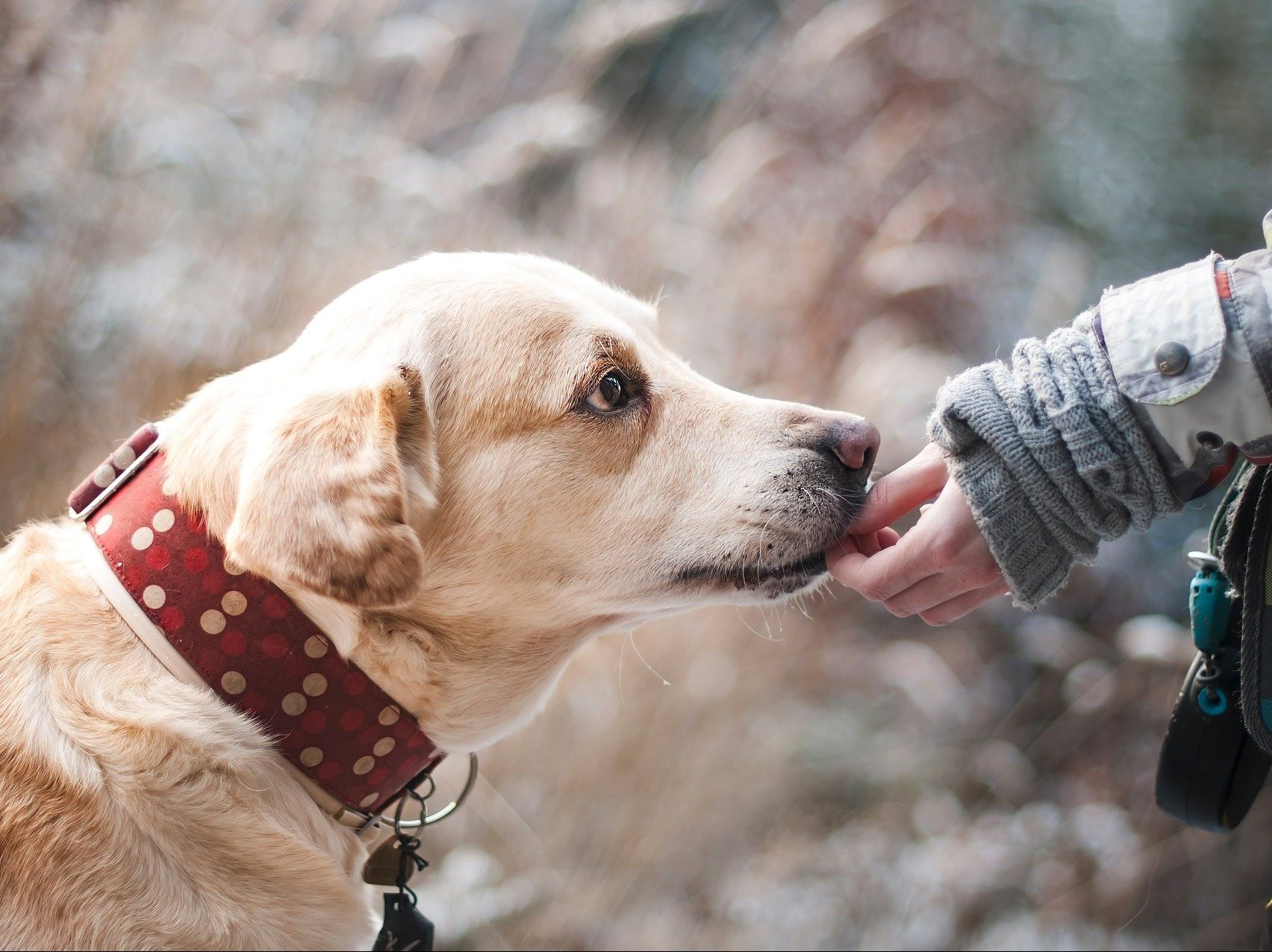 Hund schnuppert an Menschenhand