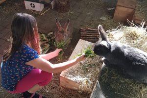 Fütterung eines Kaninchens